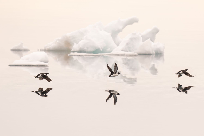 Arctic_Dreamscape_3000.jpg