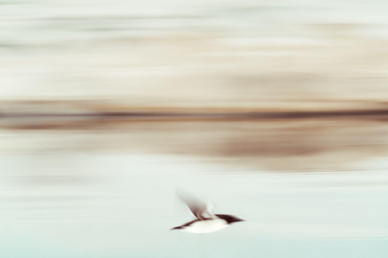 Arctic_Flight_reopt.jpg