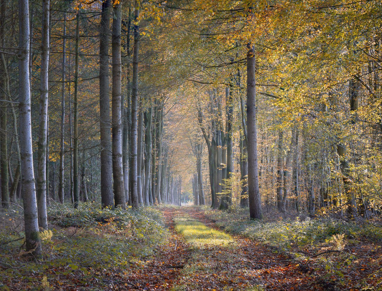Dorset_Woods.jpg