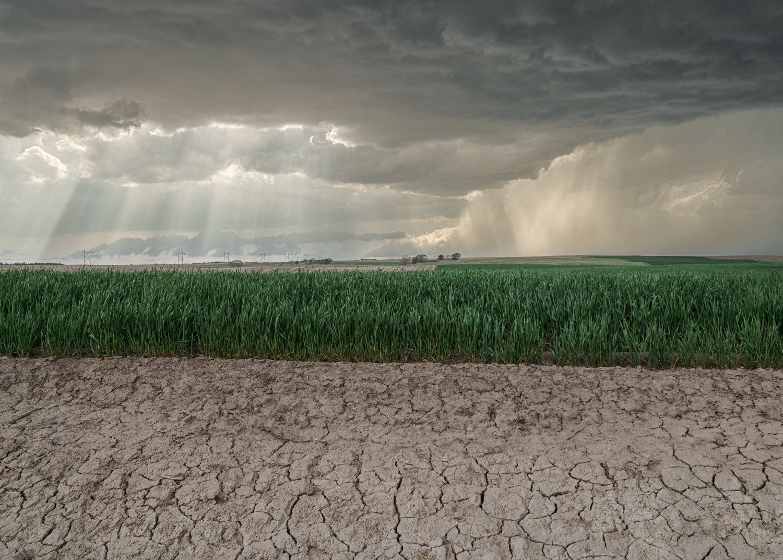 Kansas_Wheat_Field.jpg