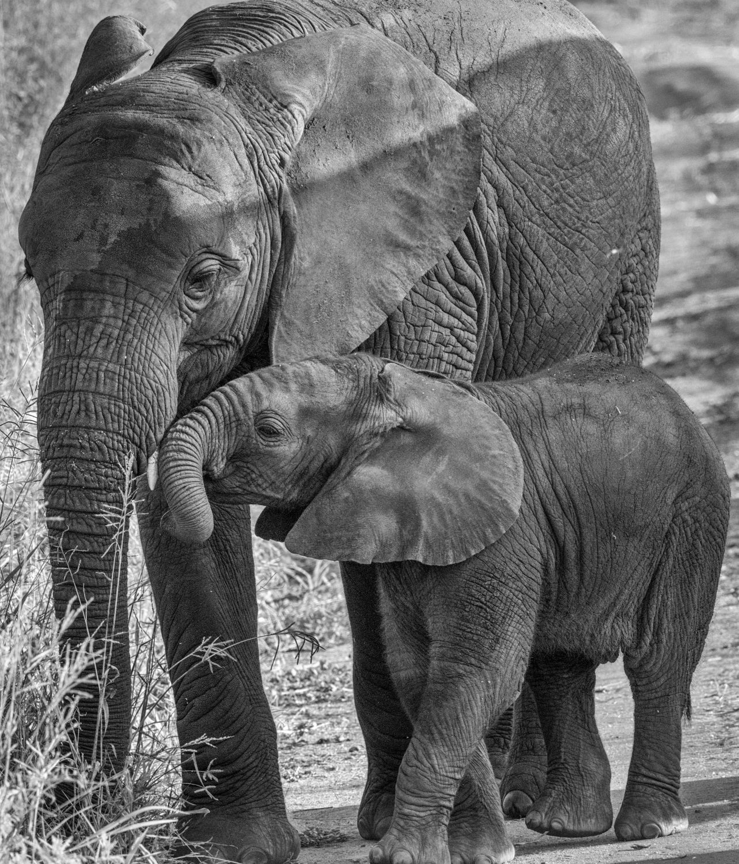Mom_and_Baby_Ele_3000.jpg