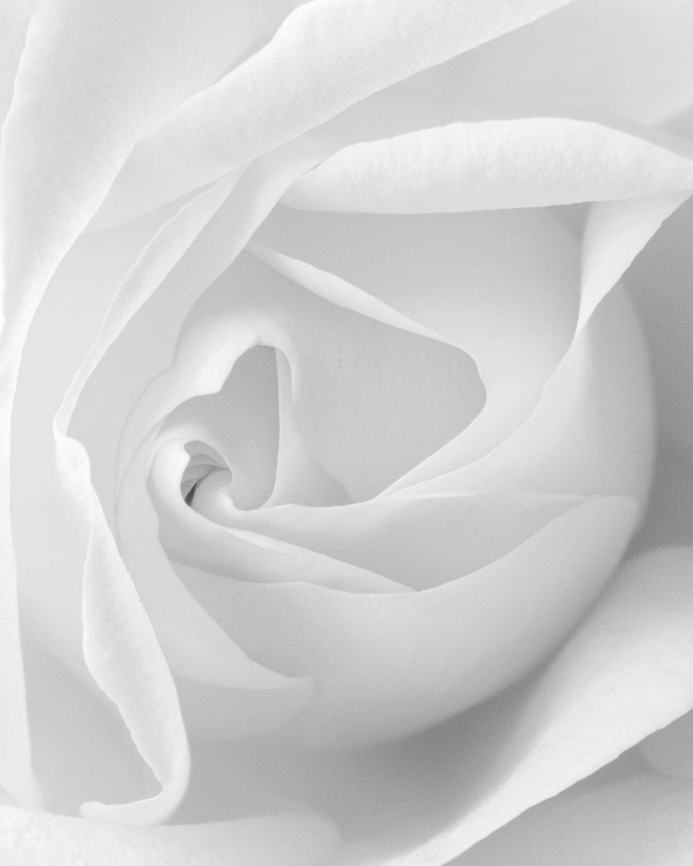 Moms_Rose_Spiraling_Perfection_BW.jpg