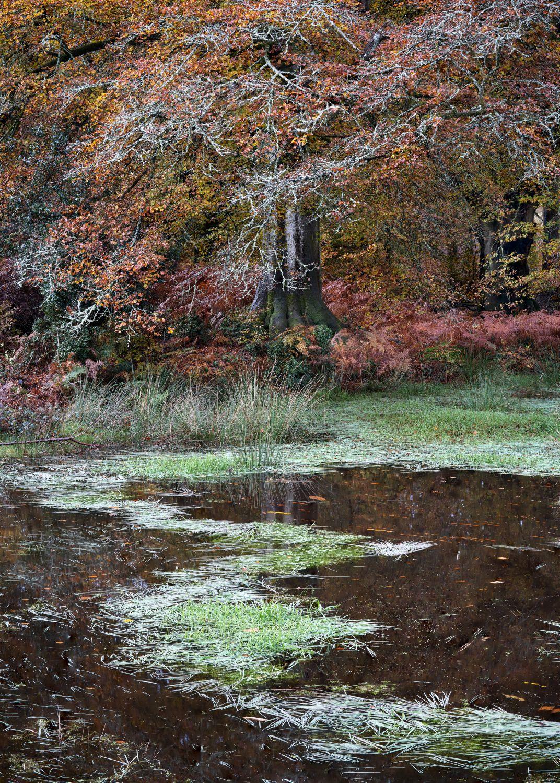 Savernake_Pond.jpg