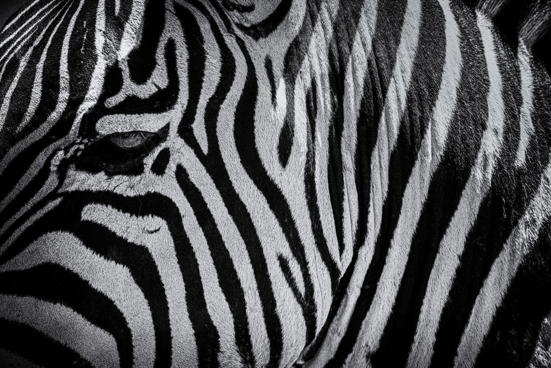 Zebra_Eye_3000.jpg