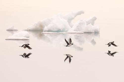 Arctic Dreamscape - On White
