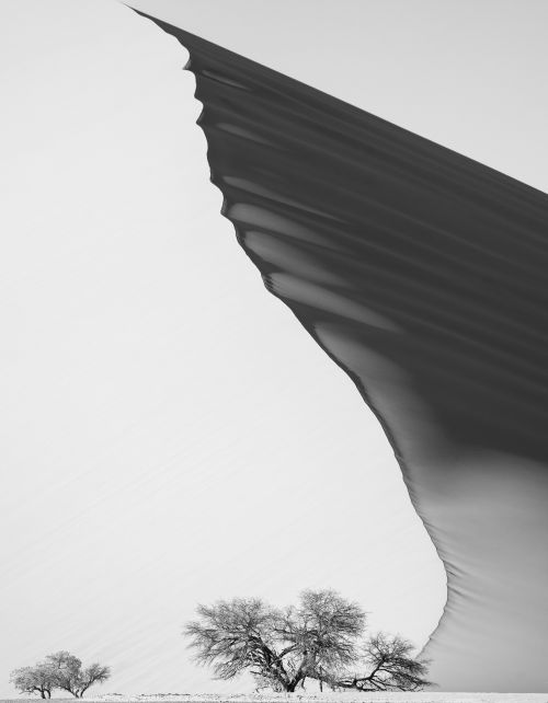 Batwing Dune - On White