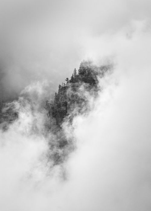 Cloud Forest - On White
