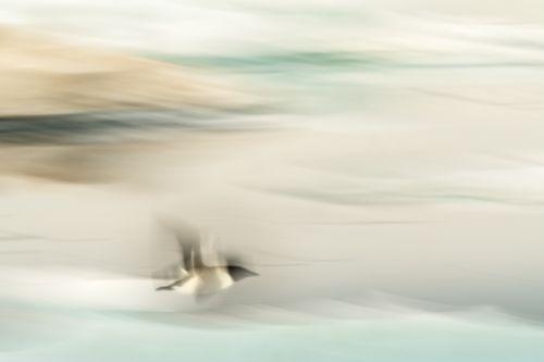 Arctic Headwinds - On White