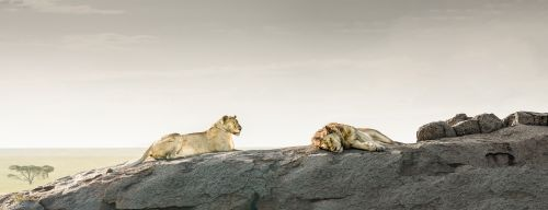 Lions Rock Pano - On White