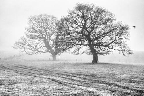 Through The Mist - On White