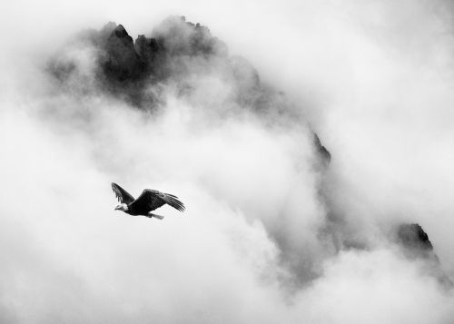 Eagle Above Mount Persis - On White