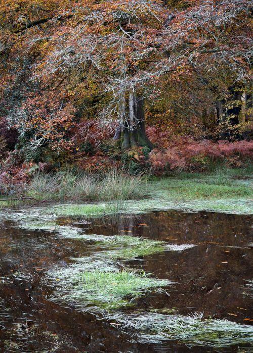 Savernake Pond - On White