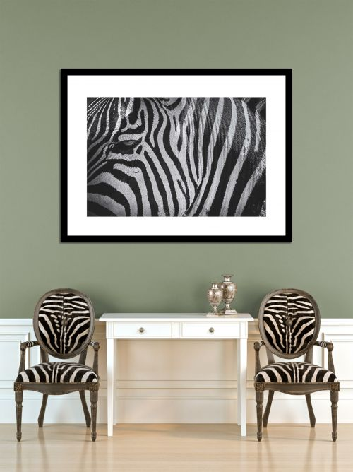 Zebra Eye in context - On White