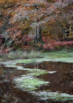 Savernake Pond